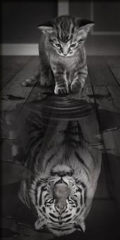Diamond Painting Katze wird Tiger