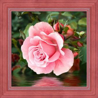 Diamond Painting Rose im Wasser